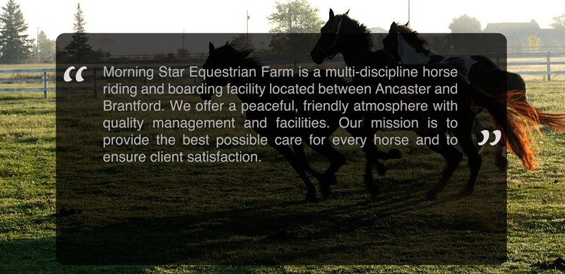 Morning Star Equestrian Farm is a multi-discipline horse riding and boarding facility located between Ancaster and Brantford.  We offer a peaceful, friendly atmosphere with quality management and fililities.  Our mission is to provide the best possible care for every horse and to ensure clients satisfaction.